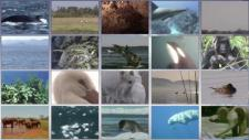 Embedded thumbnail for CMS Global Action for Migratory Animals