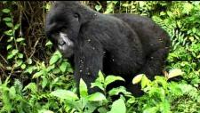 Embedded thumbnail for Rescuing the Congo's natural world heritage sites