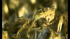 Embedded thumbnail for Invaders from the Sea (IMO-BBC Documentary)