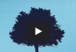 informea-tree-clip.png