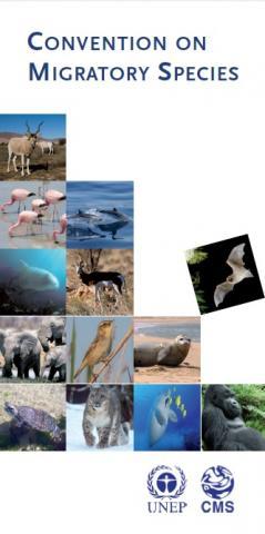 cms_brochure_e_cover.jpg