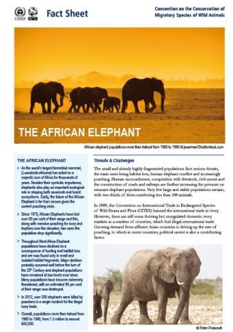 cms_fact-sheet-african-elephants_cover.jpg