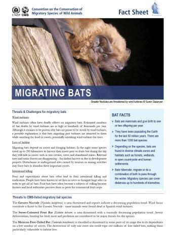 fact_sheet_bats.jpg