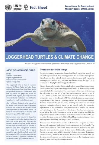 fact_sheet_loggerhead_turtle_climate_change_Page_1.jpg