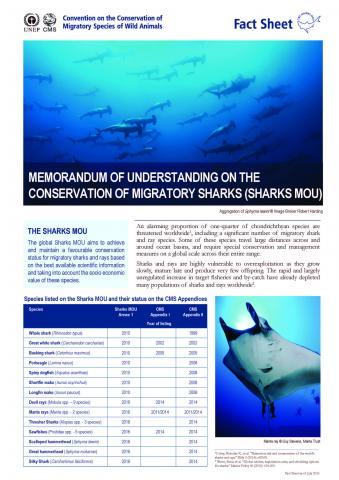 fact_sheet_sharks_english_Page_1.jpg
