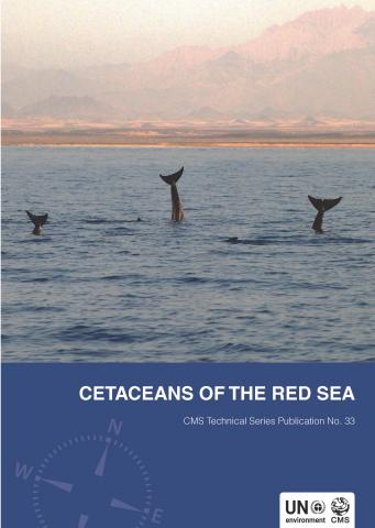 red_sea_cetaceans_report_cover_web_page1.jpg