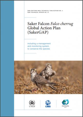 saker-gap_cover.PNG