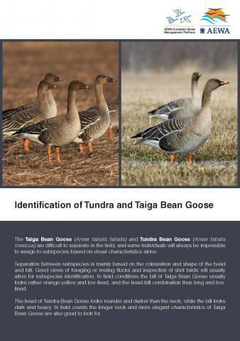 tbg_bird_guide_Seite_1.jpg