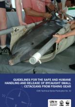 Cetaceans Guidelines.png
