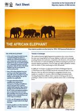 cms_fact-sheet-african-elephants_cover.jpg