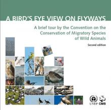 cms_pub_pop-series_bird-eye-view-flyway_cover.jpg