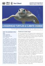 fact_sheet_loggerhead_turtle_climate_change_Page_1.jpg