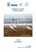 siberian_crane_news_06_2014.jpg