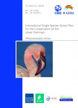 ts34_ssap_lesser_flamingo.jpg